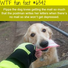 Pippa the dog - WTF fun facts