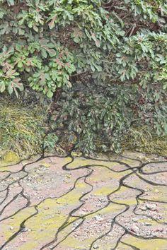 La higuera te da higos que se pueden comer, pero a la vez tiene cables fuertes que salen de sus raíces, que te atrapan y con más tranquilidad la ves. Foto Lienzo de A.J.G.F.