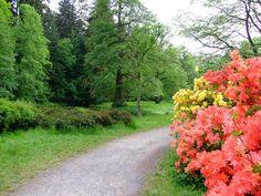Průhonice, zámecký park, cesta s rododendrony.jpg
