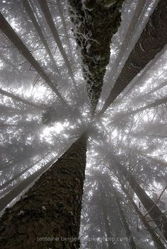 My childhood was spent lying on the ground and looking up at this sight...