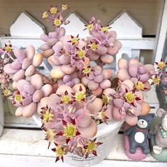 Graptopetalum amethystinum, commonly known as Lavender Pebbles or Jewel Leaf Plant Types Of Succulents, Colorful Succulents, Cacti And Succulents, Planting Succulents, Planting Flowers, Succulent Landscaping, Succulent Gardening, Unusual Plants, Cool Plants