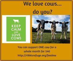 Support one cow for a whole month at Rikki's Refuge! @rikkisrefuge #Rapidan #VA www.rikkisrefuge.org/feedme