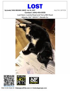 Lost Cat - Atlanta GA - Jul.03 2017 Closest Intersection: Lomita Road and Terry Mill Road County: Dekalb  #LOSTCAT #Jiji (male) #Atlanta (Lomita Road & Terry Mill Road)  #GA 30316 #Dekalb Co.  #Cat 07-03-2017! Male #Domestic Medium Hair / Maine Coon Mix Black / White/We believe he was frightened by something near our home that caused him to flee and get lost in unfamiliar surroundings. He had outdoor access but did not normally leave our lot. When he went missing we looked for his microchip…