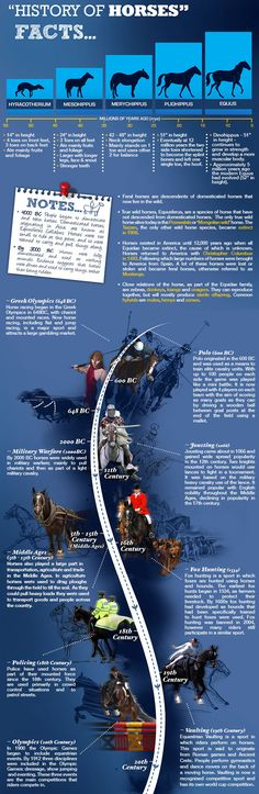 History of Horses Infographic.