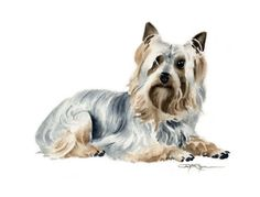 Terrier or Toy? Silky Terrier, Toy Fox Terriers, Terrier Dogs, Chihuahua Art, Australian Terrier, Watercolor Paintings, Watercolor Paper, Yorkshire Terrier, Dog Art
