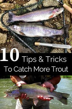 Trout Fishing Bait, Crappie Fishing Tips, Fishing Tricks, Fly Fishing, Best Trout Bait, Best Trout Lures, Rainbow Trout Lures, Catfish Bait, Fishing For Beginners