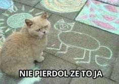 [Humor]Harry Potter Memes in Polish - Cytaty - Haha Funny, Funny Cats, Polish Memes, Weekend Humor, Best Memes Ever, Dump A Day, Hilario, Quality Memes, College Humor