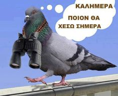 who am I going to poop on today? Funny Greek Quotes, Greek Music, Stupid Funny, Funny Stuff, My Heritage, Funny Photos, Haha, Jokes, Animals