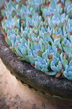 Repin via: Le Jardin Blanc 'Blue'