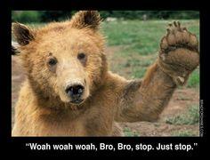 A close-up photograph of a Brown Bear Cub giving a 'high five'. Bear Wallpaper, Animal Wallpaper, Beautiful Creatures, Animals Beautiful, Funny Animals, Cute Animals, Wild Animals, Hi Five, Funny Bears