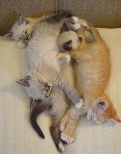Kitteh pile!!