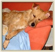 Easy Essential Oil Recipe for Dog Nausea and Vomiting