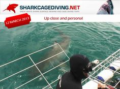 Too close for comfort? Great White Shark Tours