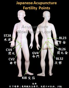 Japanese Acupuncture Fertility Points:  Commonly used acupuncture points for infertility indicated by Dr. Haruto Kinoshita, a pioneer of modern Japanese acupuncture. http://www.acupuncturemoxibustion.com/acupuncture-points/fertility-acupuncture-points/japanese-points/