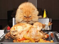 Carving knife? I don't need no stinking carving knife! (Photo via Pinterest)