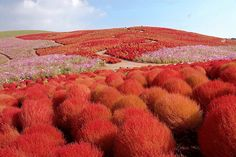 Redbush Meadow