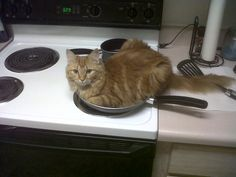 So thats where all the cathair in the food comes from...