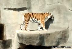 17 animales que no tienen ni la menor idea de lo que est� pasando
