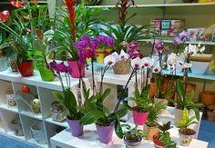Floristerias y envio de flores a hoteles y domicilio de Tenerife