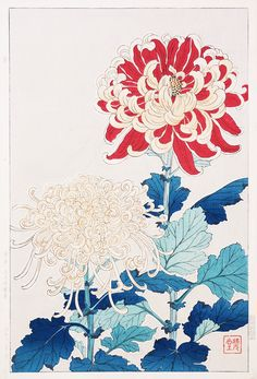 tattoos in japanese prints Japanese Drawings, Japanese Prints, Japanese Tattoos, Japanese Chrysanthemum, Japanese Flowers, Botanical Art, Botanical Illustration, Japan Painting, Traditional Japanese Art
