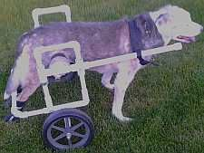 Build A Dog Wheelchair- you never know.