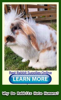 rabbit pattern    rabbit cake    rabbit run    rabbit silhouette    rabbit watercolor    rabbit funny    rabbit garden Rabbit Eating, Rabbit Run, Funny Rabbit, House Rabbit, Rabbit Toys, Pet Rabbit, Rabbit Cake, Rabbit Facts, Rabbit Treats