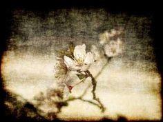 Cuadro Cherry Blossom IV