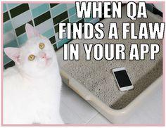 Cat QA