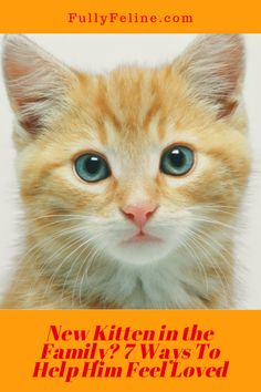 Just added a kitten to the family? Here are some ways to help him get off on the right paw! #kittens #kittencare