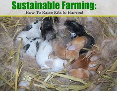 #Sustainable farming is a big trend. This guide for harvesting rabbit meat is a must read!