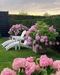 Outdoor Garden Decor, Diy Garden, Outdoor Gardens, Dream Garden, Indoor Garden, Amazing Gardens, Beautiful Gardens, Beautiful Flowers, Endless Summer Hydrangea