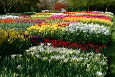 """Spring tulip show at Longwood Gardens    """"The man who has planted a garden feels that he has done something for the good of the world."""" - Vita Sackville-West"""