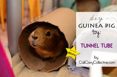 how to make guinea pig tunnel toy and links to lots of other toy and accessory ideas