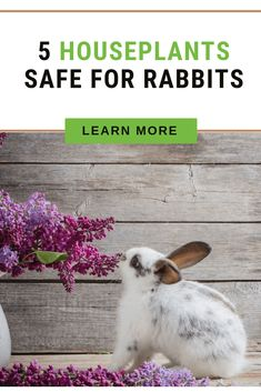 There comes the moment when you realize that your very own home is quite a battlefield full of dangers and obstacles, especially if you have a rabbit. So check this post to find out about 5 houseplants safe for rabbits. Meat Rabbits, Raising Rabbits, Bunny Rabbits, Rabbit Diet, Rabbit Eating, Diy Bunny Toys, Rabbit Habitat, Blooming Succulents, Garden Nook