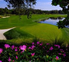 Love the Grand Cypress Golf Course!