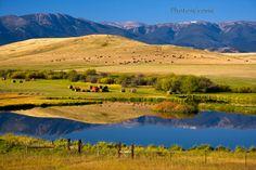 Montana Ranch scene. USA.