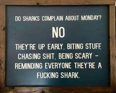 Monday, I will shine my pearlies and snap my teeth at everyone!