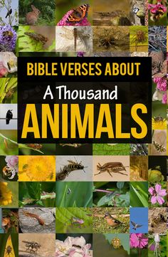 Bible verses about animals -