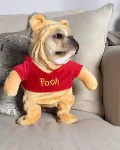 Baby Pugs, Cute Baby Dogs, Cute Funny Dogs, Cute Dogs And Puppies, Cute Funny Animals, Doggies, Funny Animal Videos, Funny Animal Pictures, French Bulldog Halloween Costumes