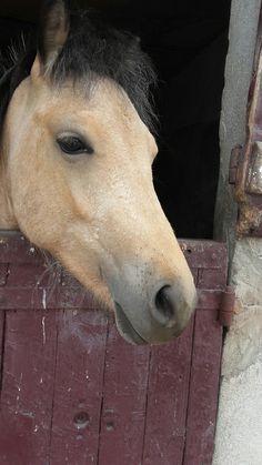 Erco Cow, Horses, Animals, Animaux, Horse, Animal, Animales, Animais
