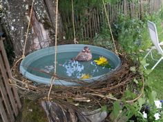 What has a homemade bird bath got to do with Raw food? OK, so this is rather off topic and not about Raw food, but it is about nature, being in nature and enjoying nature – therefore holistic living, so I guess its OK wouldn't you say? If you have a homemade bird bath I would love to hear about it?