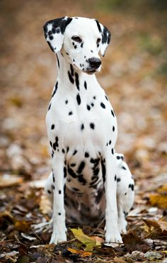 9554df95a981d 3764 Best Puppy Love!! images in 2019 | Dogs, Puppies, Animals