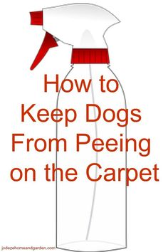 How to Keep Dogs From Peeing on Carpet
