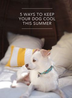 Ideas to keep your dog cool and comfortable this summer!
