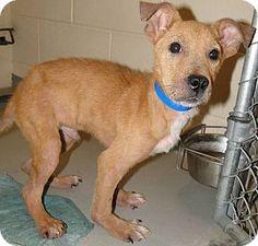 Urgent act quickly to save  Brooksville, FL - Terrier (Unknown Type, Medium) Mix. Meet 1023627, a dog for adoption. http://www.adoptapet.com/pet/11051776-brooksville-florida-terrier-unknown-type-medium-mix