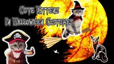 Cute Kittens In Halloween Costumes Cats Meowing, Kittens Cutest, Cute Dresses, Funny Cats, Halloween Costumes, Art, Pretty Dresses, Art Background, Funny Kitties