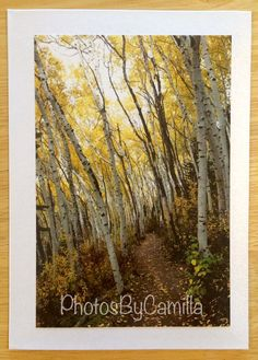 SPECIAL PROMO until May 15, 2015: Use coupon code SPRING2015 and receive 50% off. Minimum purchase $40.00 which means you only pay $20.00  Rob's Trail in the fall Park City Utah by PhotosByCamilla on Etsy
