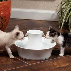 Fontaine Drinkwell Inox 360° 3.8L - Fontaine et filtre pour chat et chien - Petsafe / wanimo