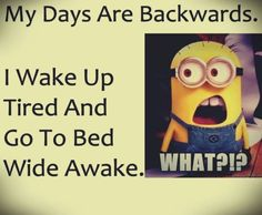 47 Funny Minion Quotes