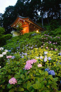 Mimurotoji Temple, Kyoto, Japan